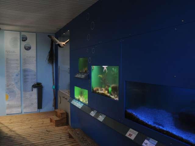 Akvarierne på Naturzentrum Amrum