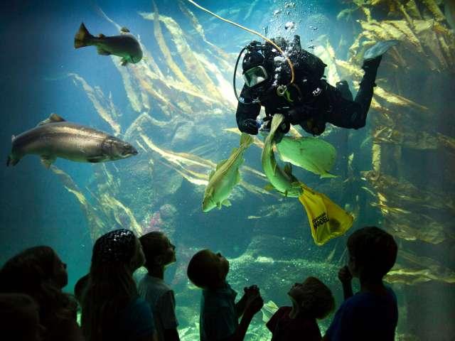 Dykkere i det store akvarie på Multimar Wattforum i Tønning