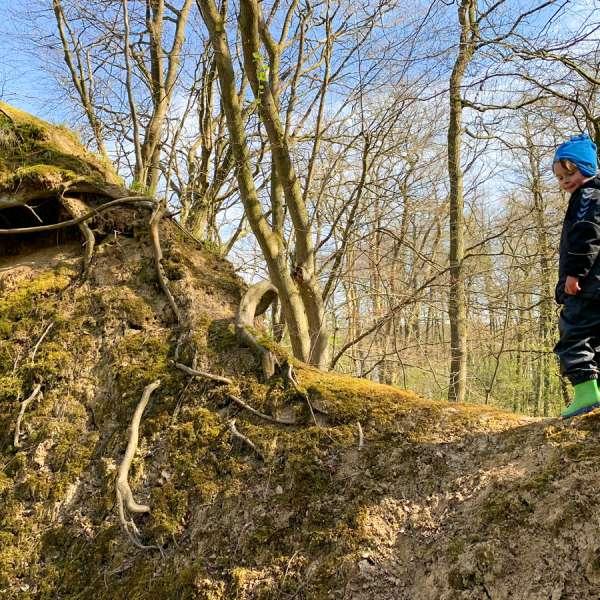 Klintkysten er helt overladt til sig selv i naturområdet Bockholmwik Höftland