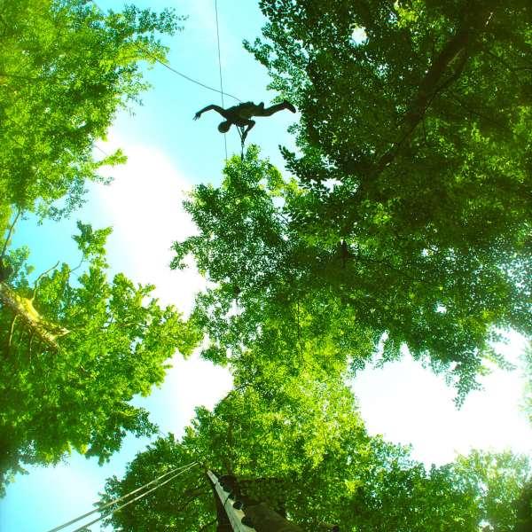 Besøgende hænger mellem trætoppene i Hochseilgarten Altenhof