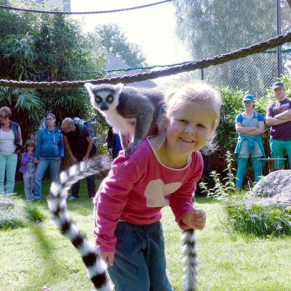 Pige med lemur på skulderen i Tierpark Gettorf