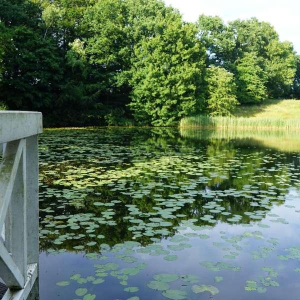 Søen på Jaruplund Højskole ved Flensborg set fra terrassen