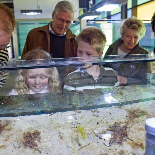 Børn og forældre iagttager dyrene i et af bassinerne på Ostsee Info-Center i Egernførde