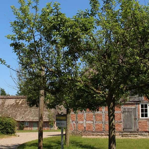 Marxenhuset på Landschaftsmuseum Angeln/Unewatt i Unevad