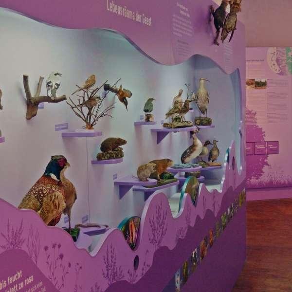 Udstilling om hedelandskaber på naturkundskabsmuseet i Nibøl