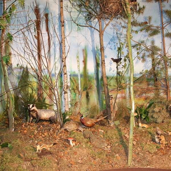 Udstilling om hvad der lever i skov og krat på Naturzentrum Mittleres Nordfriesland i Bredsted
