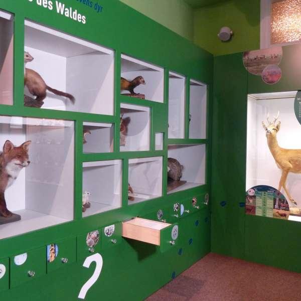 Udstilling om hvad der lever i skoven på naturkundskabsmuseet i Nibøl