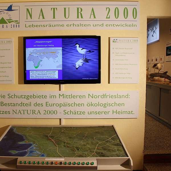 Udstilling om naturområderne i regionen på Naturzentrum Mittleres Nordfriesland i Bredsted